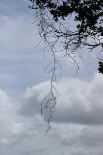 Hanging Tinstle