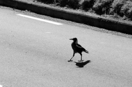 Lets cross the road