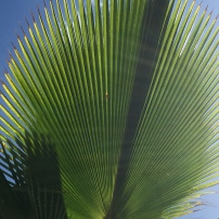 Beautiful Palm